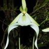 Chiêm ngưỡng 5 loài hoa hiếm gặp nhất