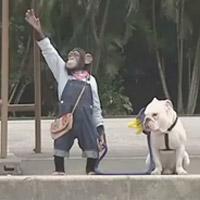 Cặp đôi hoàn cảnh: Khỉ và Chó đi xe bus