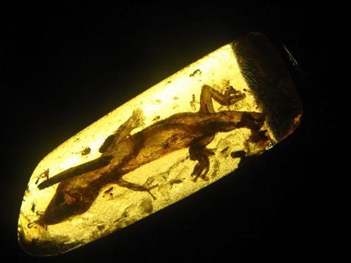 Mexico: Phát hiện thằn lằn 23 triệu năm tuổi - 1