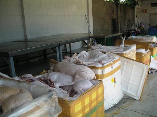 Bắt giữ xe khách chở gần 600kg heo sữa bệnh - 1