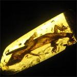 Tin tức trong ngày - Mexico: Phát hiện thằn lằn 23 triệu năm tuổi