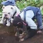 Video Clip Cười - Cặp đôi hoàn cảnh: Đi đào khoai lang