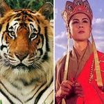 """Phim - Chật vật """"chiêu hàng"""" hổ đóng Tây Du Ký"""
