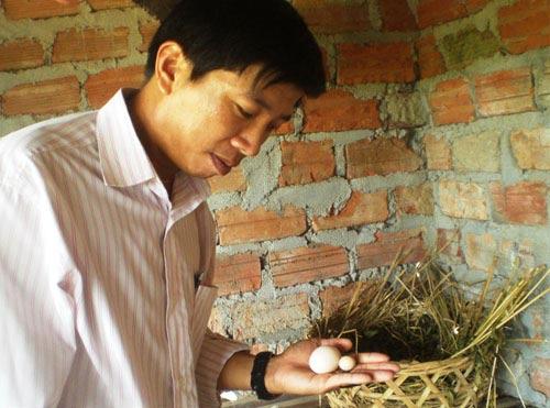 Cặp gà nòi đẻ trứng chỉ to bằng... đầu bút bi - 2