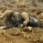 Tin tức trong ngày - Phát hiện voi con chết ở VQG Yok Đôn