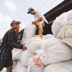 Thị trường - Tiêu dùng - Thương hiệu lúa gạo - phải một thập kỷ nữa?