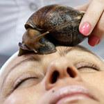 Phi thường - kỳ quặc - Cho ốc sên bò lên mặt để dưỡng da