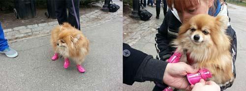 """""""Âm mưu giày gót nhọn"""" tuyệt đẹp tại New York - 14"""