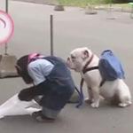 Cười 24H - Cặp đôi hoàn cảnh: Khỉ và chó đi chợ