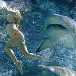"""Tin tức trong ngày - Úc chế đồ bơi """"tàng hình"""" trước mũi cá mập"""
