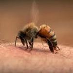 Tin tức trong ngày - Du khách Hàn Quốc bị ong đốt chết tại Bà Nà