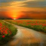 Du lịch - Đẹp hút hồn những cánh đồng hoa
