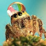 Phi thường - kỳ quặc - Kỳ thú nhện đội vương miện nước