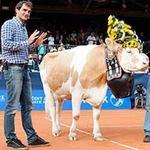 Thể thao - Federer được tặng bò khi trở lại Thụy Sỹ