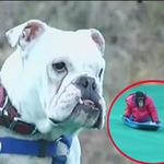 Cặp đôi hoàn cảnh: Chó đòi quyền lợi
