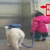 Cặp đôi hoàn cảnh: Khỉ đi cầu thang máy