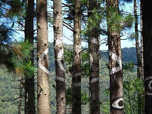 Khu rừng thần tiên ở Tây Ban Nha - 2