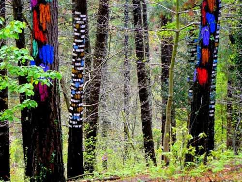 Khu rừng thần tiên ở Tây Ban Nha - 3