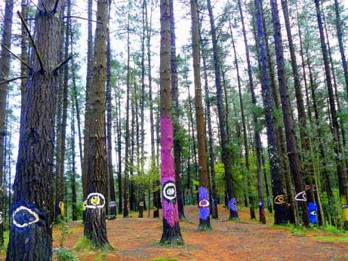 Khu rừng thần tiên ở Tây Ban Nha - 6