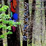 Du lịch - Khu rừng thần tiên ở Tây Ban Nha
