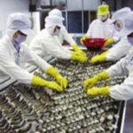 Thị trường - Tiêu dùng - Kim ngạch xuất khẩu thuỷ sản giảm