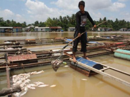 Di dời KCN Biên Hòa 1: 26.000 lao động bị ảnh hưởng - 1