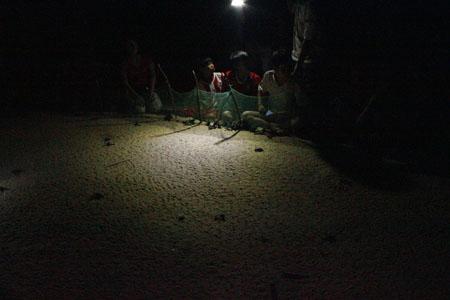 Tận mắt ngắm 59 rùa biển chào đời ở Bình Định - 1
