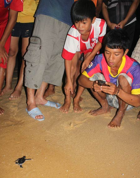 Tận mắt ngắm 59 rùa biển chào đời ở Bình Định - 2