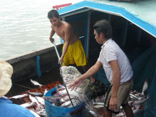 Thị trường cá tra lóp ngóp - 1