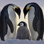 Du lịch - Đến Nam Cực- xứ sở của chim cánh cụt