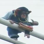 Cặp đôi hoàn cảnh: Khỉ và chó đi chụp ảnh