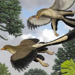 Tin tức trong ngày - Giải mã bí ẩn của khủng long bay