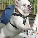 Cặp đôi hoàn cảnh: Chó chụp ảnh như nào ?