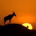 """Du lịch - Tới thăm Kenya - """"Cái nôi của nhân loại"""""""