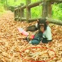 Cặp đôi hoàn cảnh: Khỉ chần chừ, chó mạnh tay