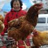 Virút cúm H7N9 lây từ người sang người