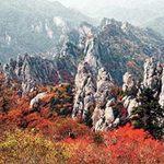 Du lịch - Đắm mình vào thiên sắc mùa thu xứ Hàn