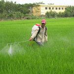 Thị trường - Tiêu dùng - 51% lượng thuốc trừ sâu nhập khẩu từ TQ