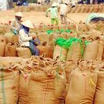Thị trường - Tiêu dùng - Giá lương thực toàn cầu sẽ tiếp tục giảm