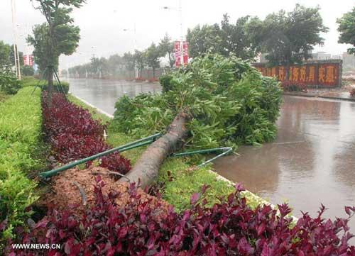 Chùm ảnh siêu bão Utor tàn phá Trung Quốc - 1
