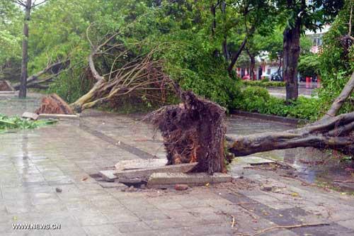 Chùm ảnh siêu bão Utor tàn phá Trung Quốc - 3
