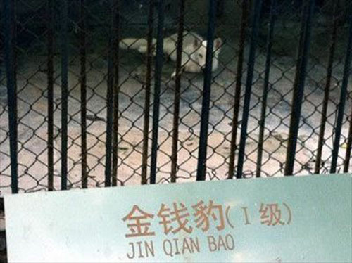 Sư tử biết...sủa trong vườn thú TQ - 2