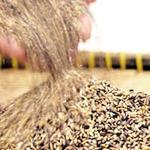 """Thị trường - Tiêu dùng - """"Gạo chống ung thư"""" đắt gấp 4 lần gạo thường"""