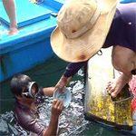 Tin tức trong ngày - Kỳ bí vùng biển chôn vùi 4 tàu cổ vật