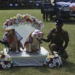 Tin tức trong ngày - Chó nghiệp vụ Sri Lanka được cưới tập thể