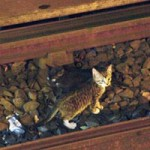 Tin tức trong ngày - Mỹ: Đóng cửa tàu điện ngầm giải cứu... mèo
