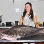 Tin tức trong ngày - Câu được cá leo khổng lồ trên sông Sêrêpôk