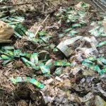 Tin tức trong ngày - Chỉ đạo làm rõ vụ chôn thuốc BV thực vật