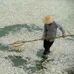 Tin tức trong ngày - TQ: Nhà máy xả thải, cá chết trắng sông