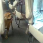 Tin tức trong ngày - TQ: Chú chó tìm chủ suốt 15 ngày ở bến xe